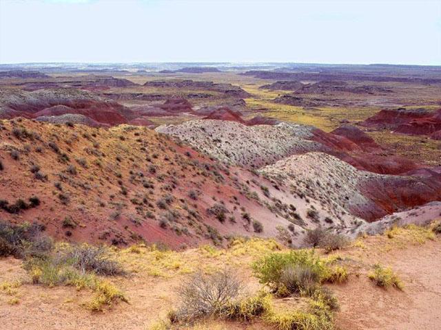 AZ 31 PF, PD National Park courtesy Robert Schoenbeck
